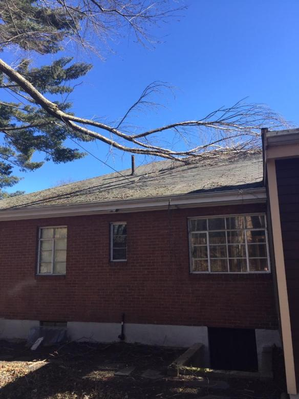 TREE ON ROOF.jpg